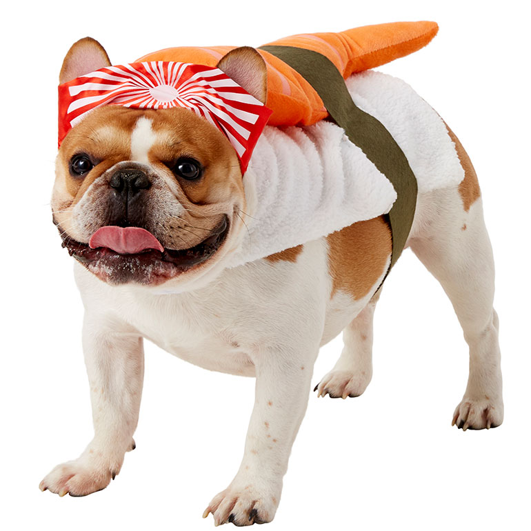 Best dog halloween costumes - sushi