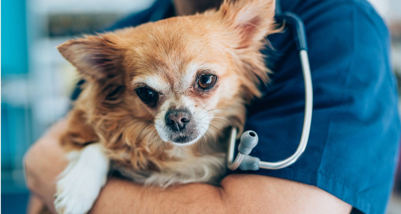 Heartworms in Dogs: Signs, Treatment and Prevention