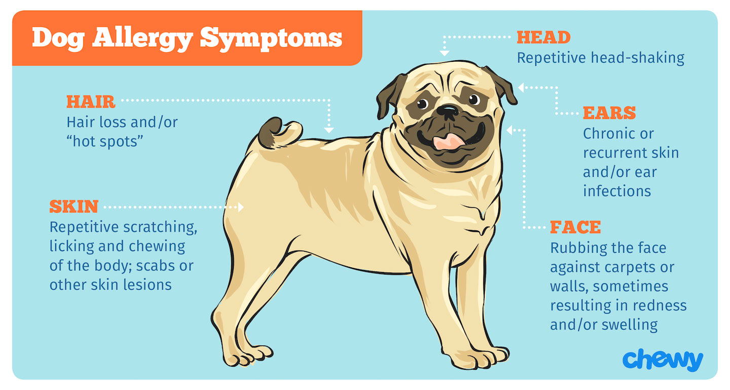 Dog Allergies Causes Symptoms And Treatment