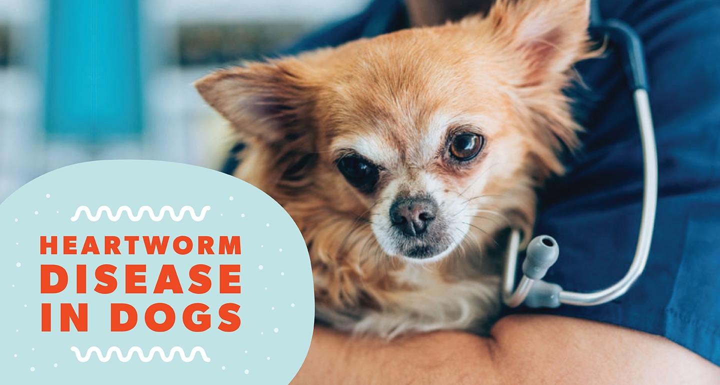 Heartworms In Dogs Symptoms Treatment And Prevention