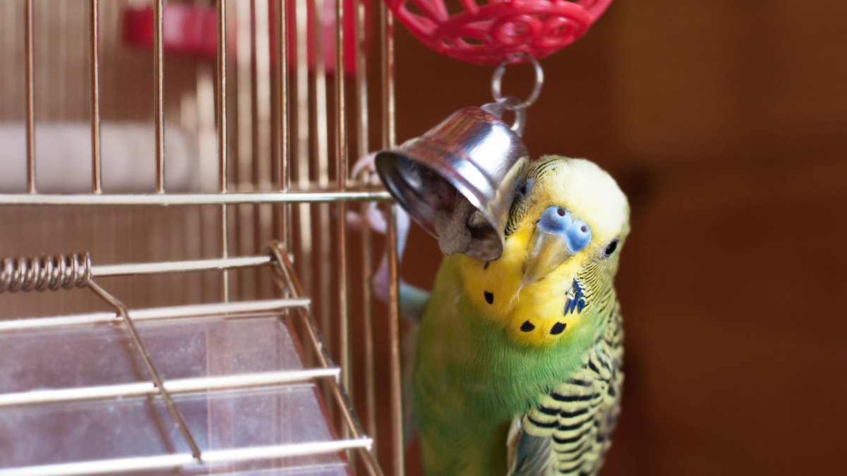 Do You Know The True Cost Of Your Parrot