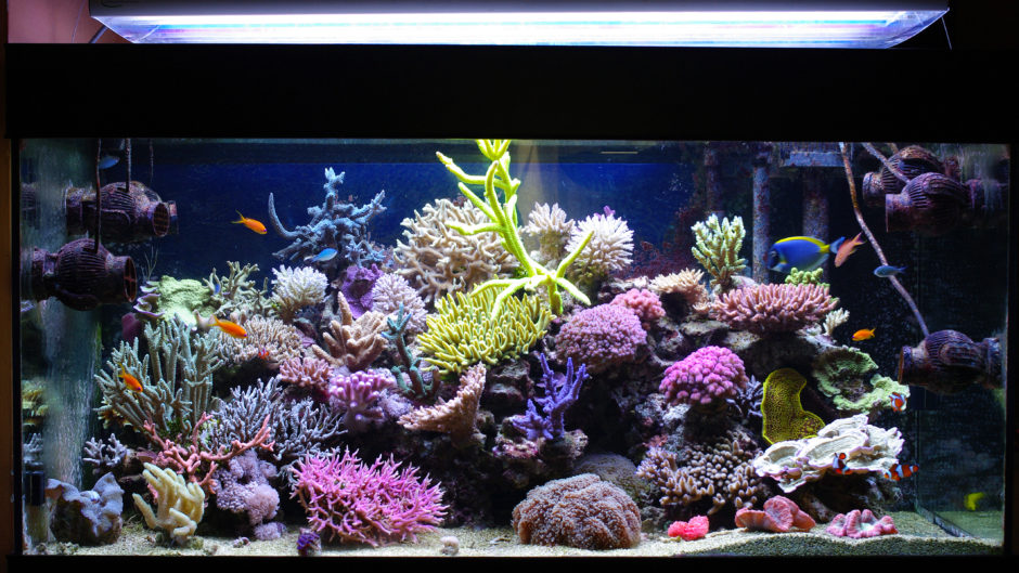5 Tips For Building An Affordable Marine Aquarium - Pet