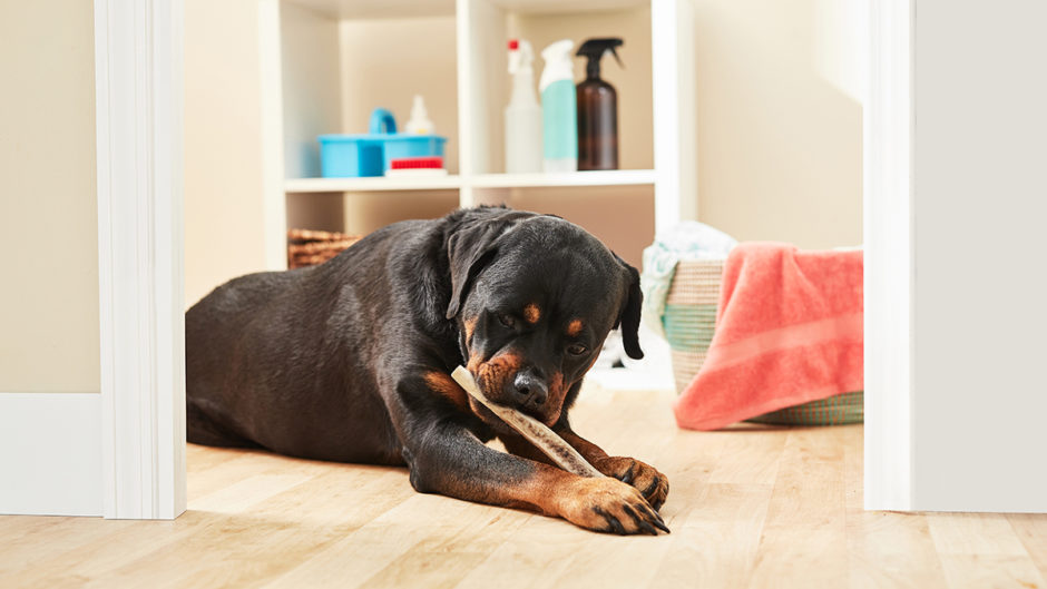 Best options for aggressive chewers