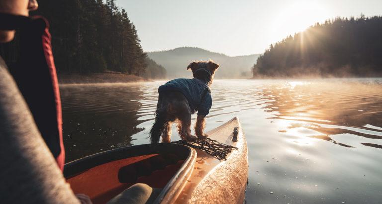 dog day trips