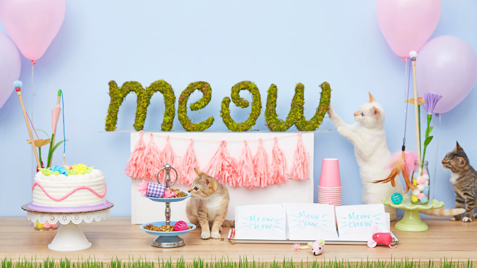 Outstanding Lets Throw A Cat Birthday Party Funny Birthday Cards Online Necthendildamsfinfo