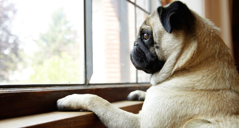 Separation Anxiety in Dogs: Symptoms, Causes and How to Help