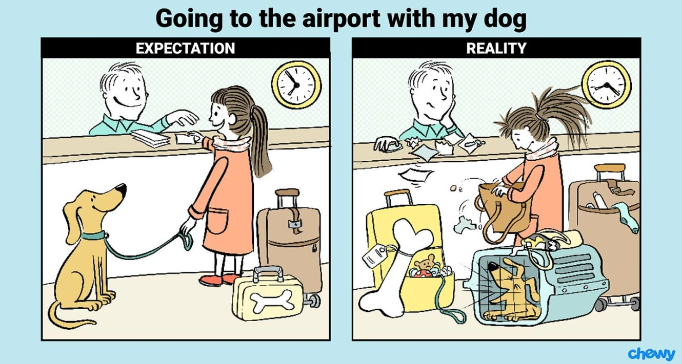 Traveling with Your Dog at the airport