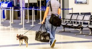 airline pet policy