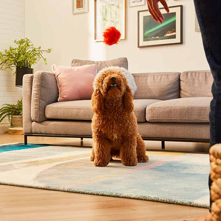 games to play with dogs: never ending fetch