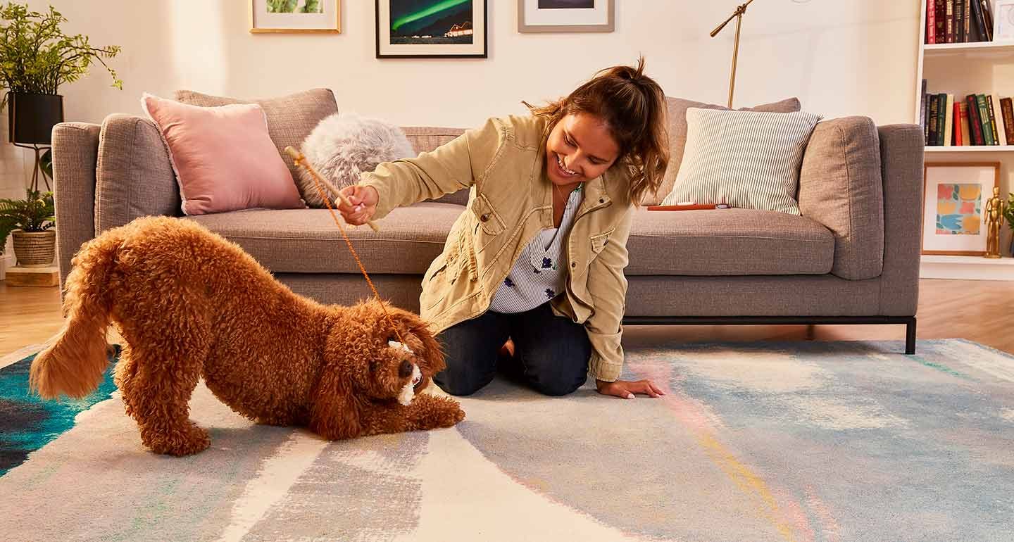 games to play with dogs - toy on a string