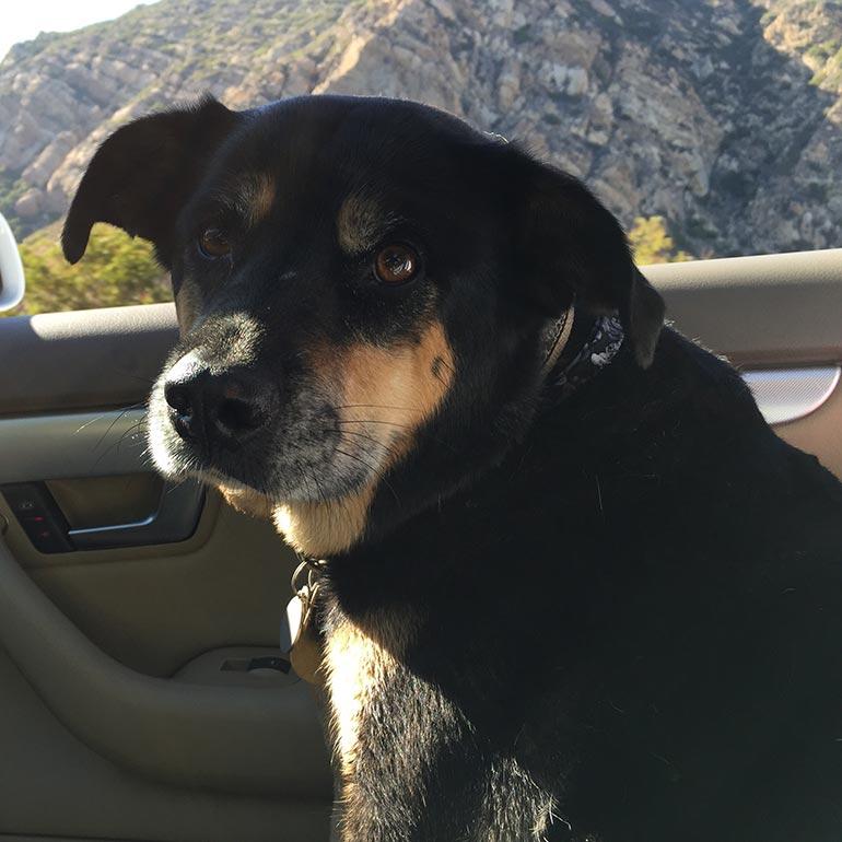 Kate Walsh's dog Rosie
