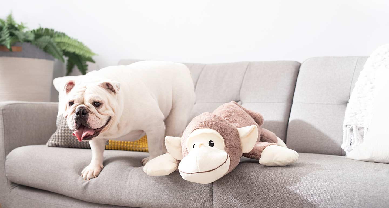 Chewy's Picks: Monkey Dog Toy