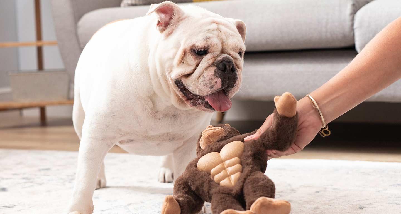 Chewy's Picks: Gorilla Dog Toy