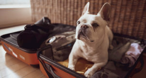dog in suitcase: pet boarding and pet sitting