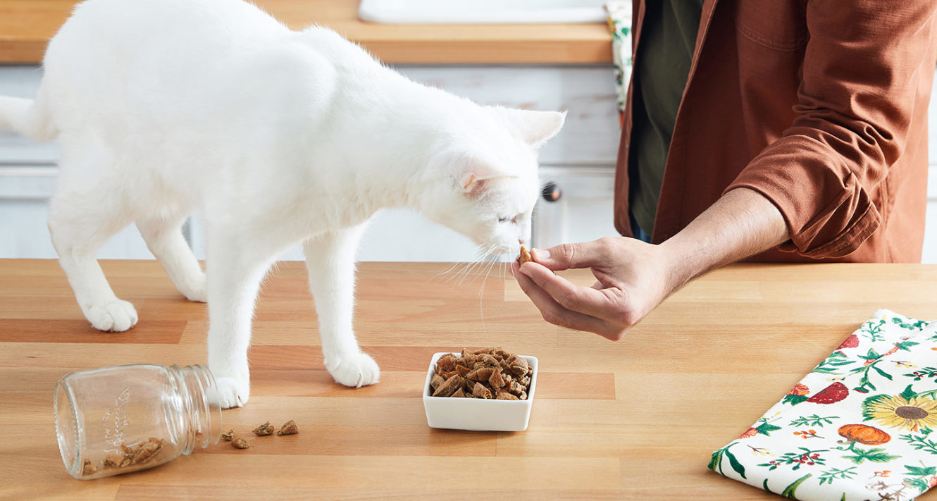 homemade cat treat