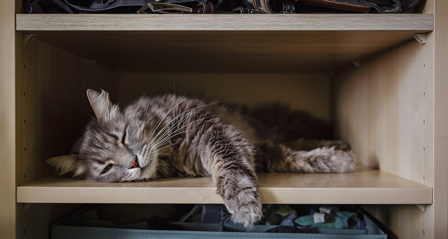 Cat Sleeping in Closet