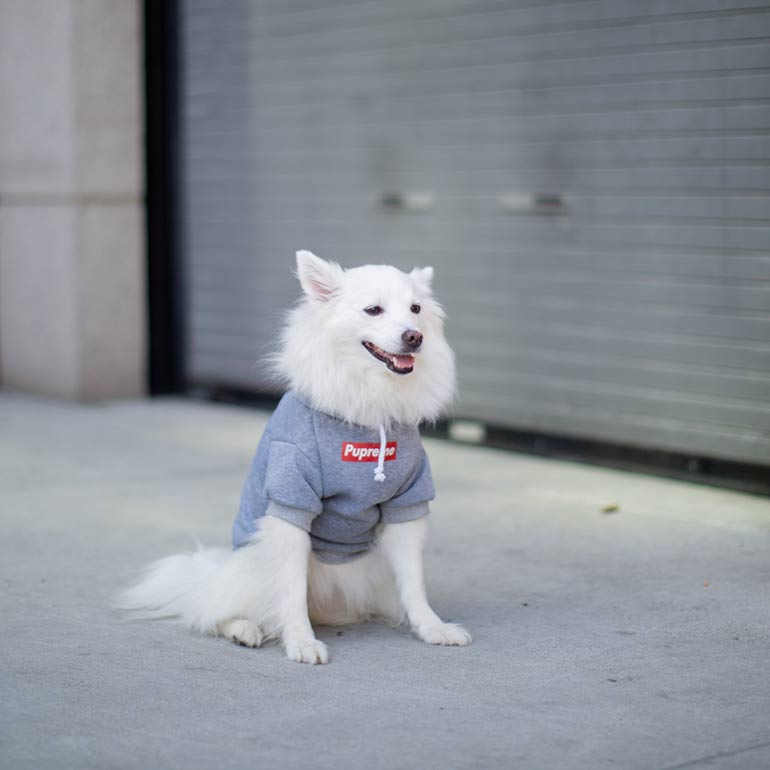 dog winter clothes