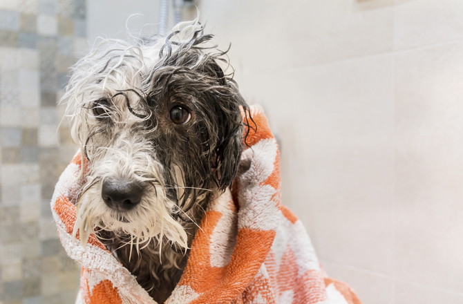 Dog Grooming 5 Things You Should Never Do