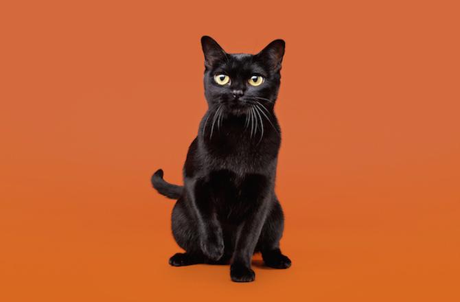 8 Black Cat Breeds