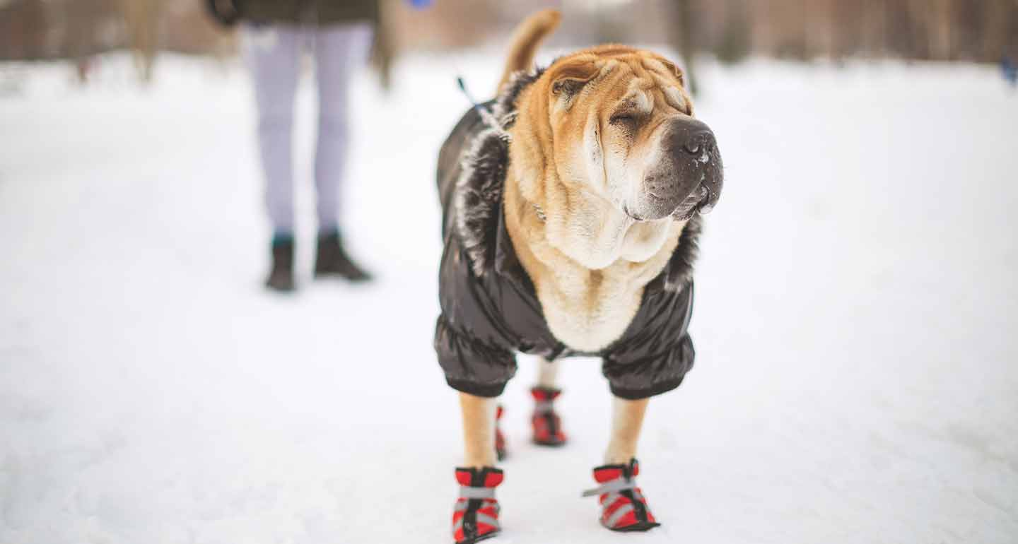 How to keep outside dogs warm in winter