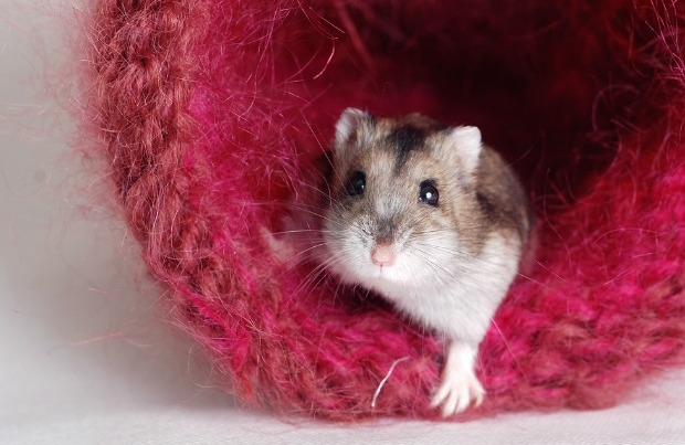 7 Surprising Pets That May Be Illegal