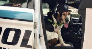 Pet Bucket List - ride in police cruiser