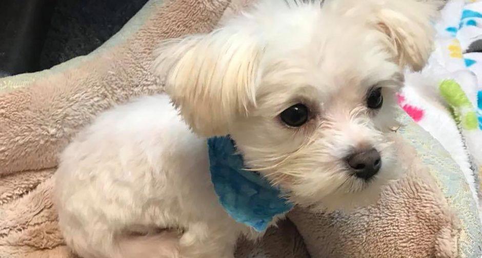 puppy bowl 2019 pistachio