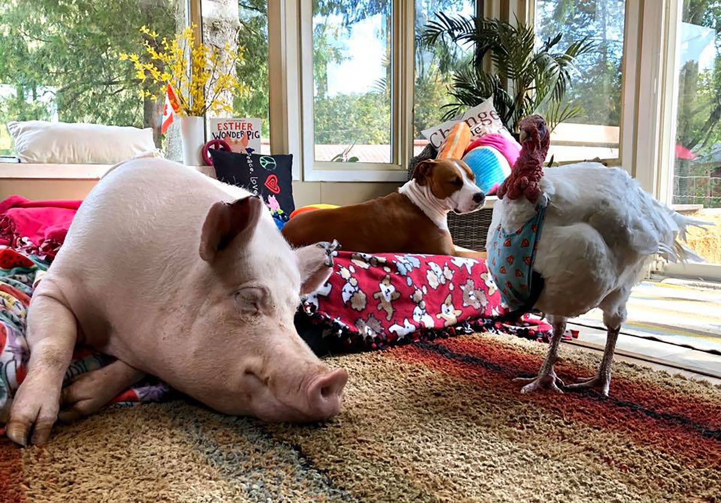 Esther the Wonder pig and her turkey and dog friends
