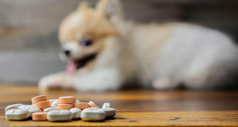 dog arthritis natural remedies