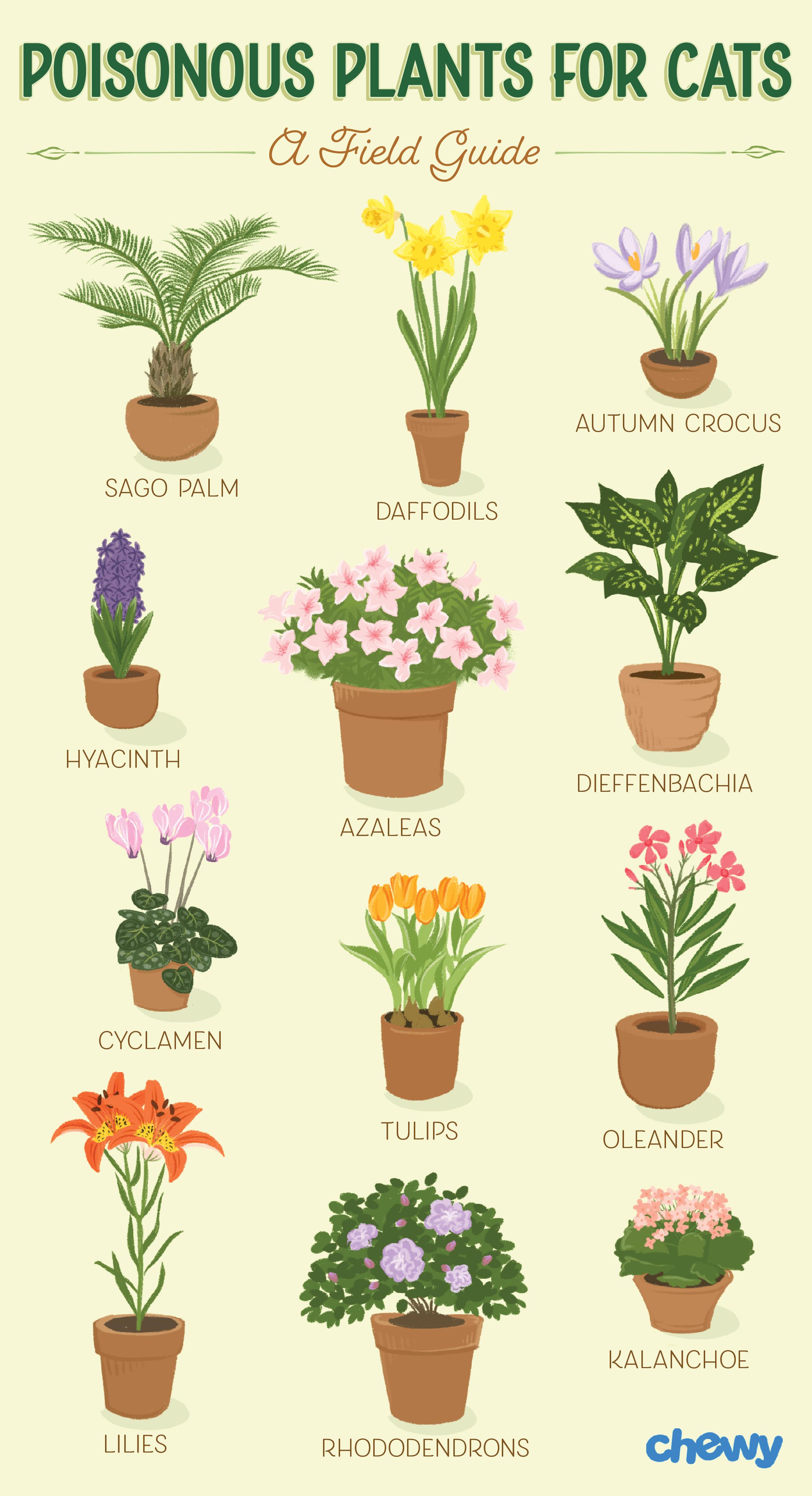plants poisonous to cat
