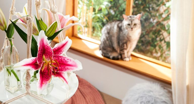 plants poisonous to cats
