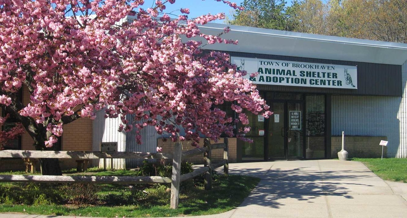 Town of Brookhaven Animal Shelter