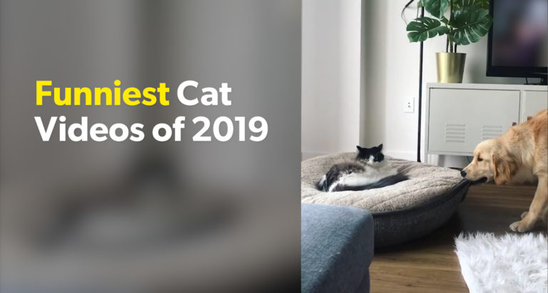 Funniest Cat Videos 2019