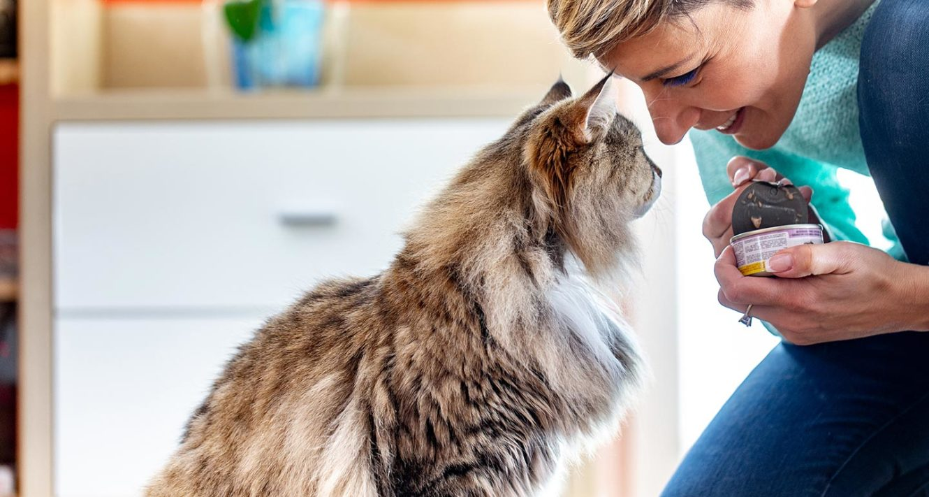 The Best Senior Cat Food A Guide To Feeding Your Older Cat