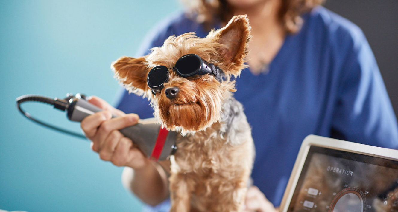 dog arthritis natural remedies - cold laser therapy