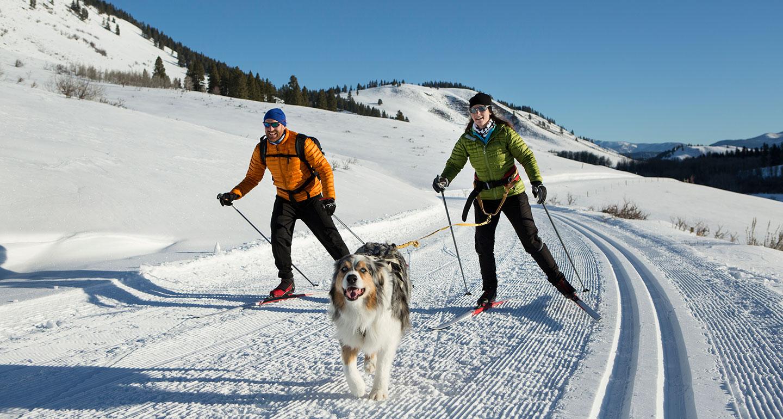 winter dog sports - skijoring