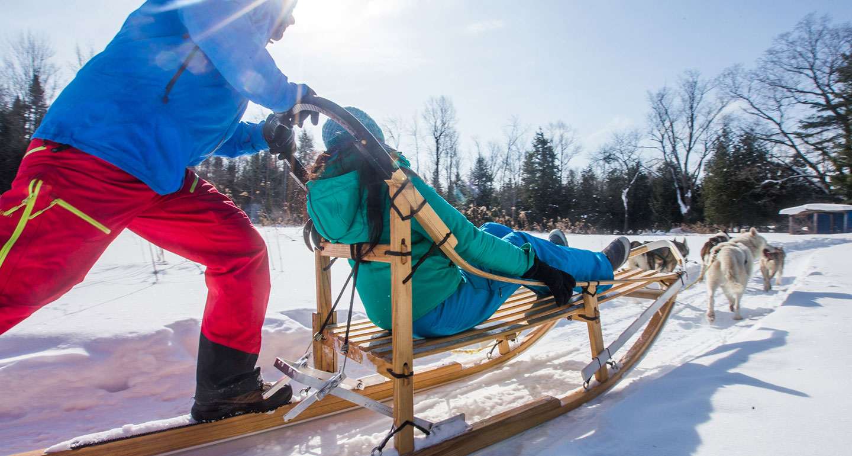 winter dog sports - mushing aka dog sledding