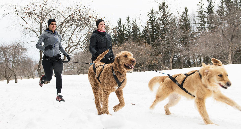 winter dog sports - canicross