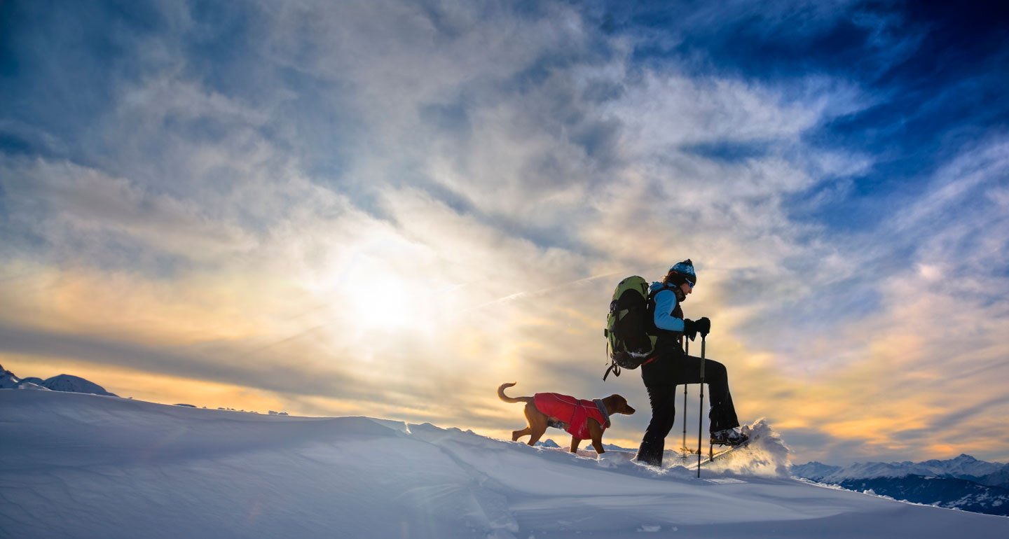 winter dog sports -snowshoeing