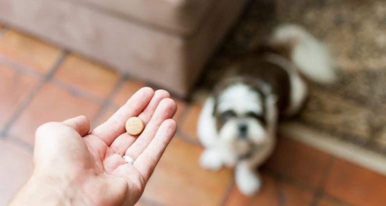 Liver supplements for dogs