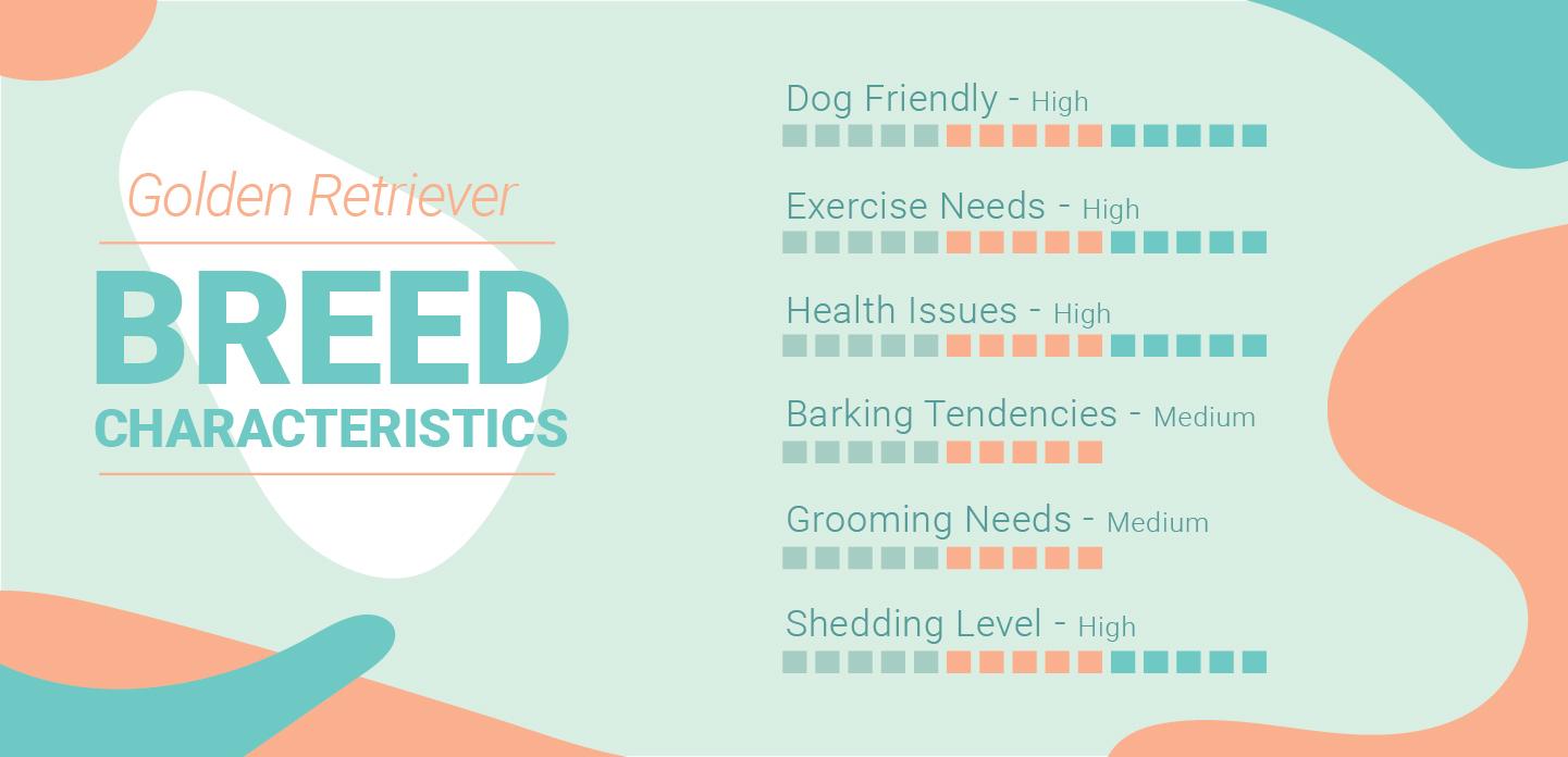 Golden Retriever Characteristics
