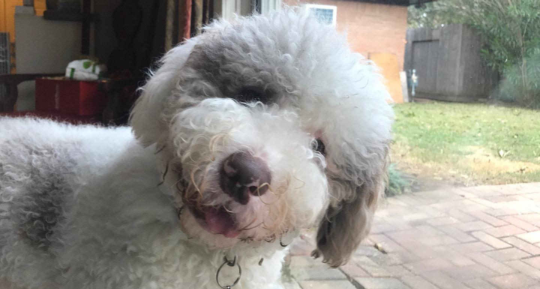 Puppy Bowl 2019