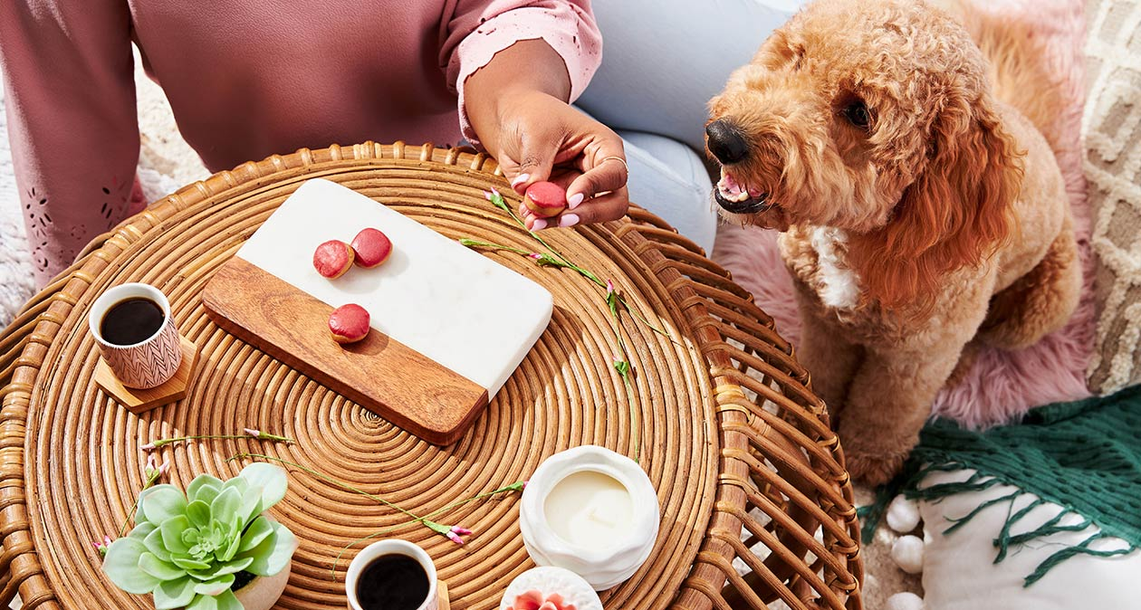 DIY dog treat