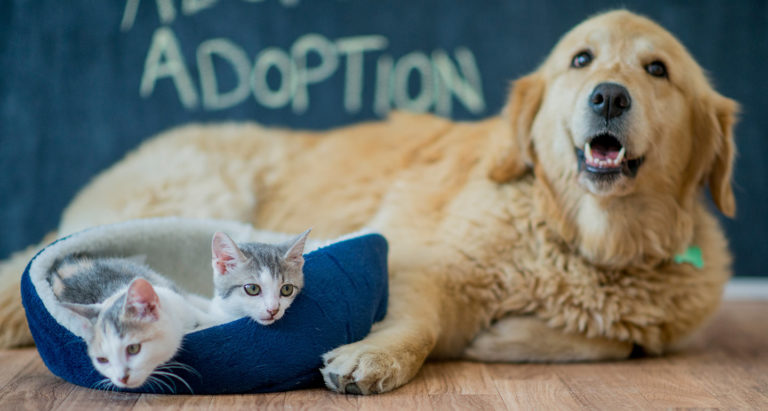 Adopt-a-Pet Chewy Partnership