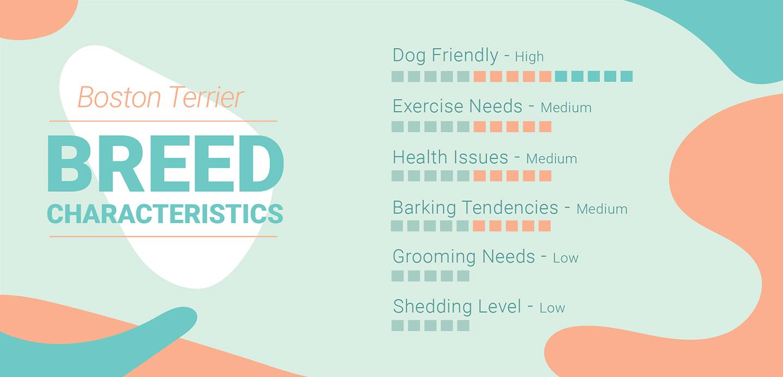 Boston Terrier Characteristics