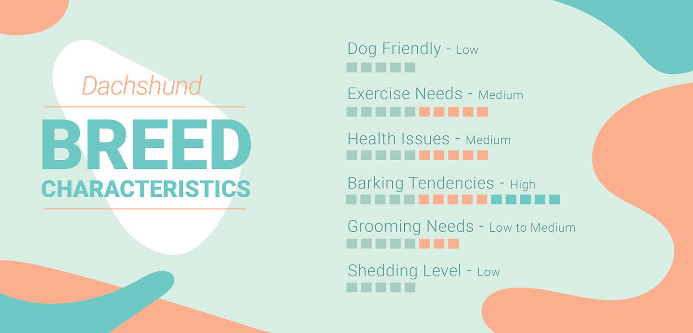 Dachshund Characteristics