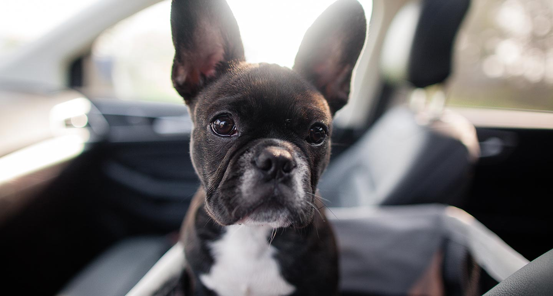 dog adoption checklist