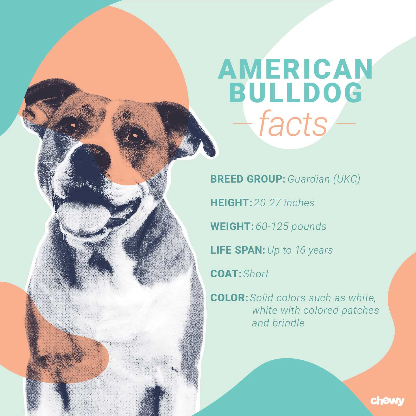 American Bulldog Facts