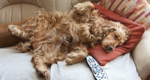What shows to stream for pet parents