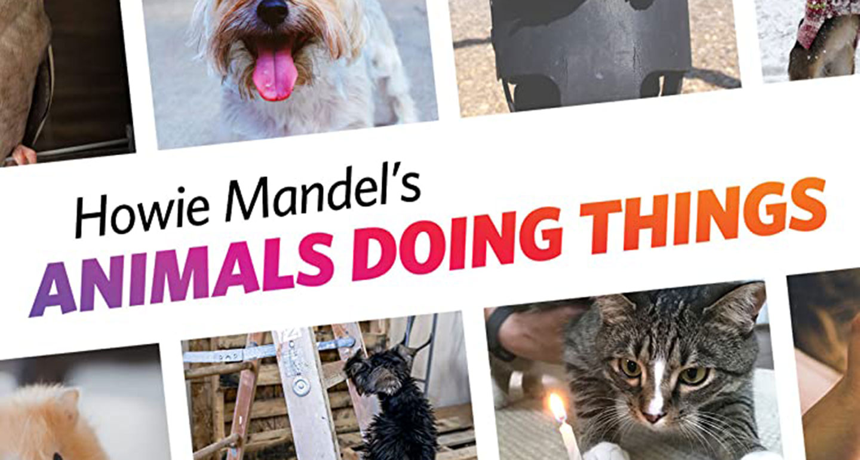 Best TV shows to stream - Animals Doing Things via IMDB